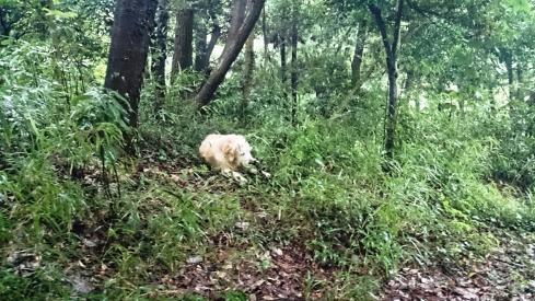 森の中DSC_0165