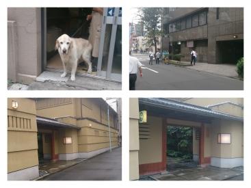 人形町かんばん犬PicsArt_1440675950207