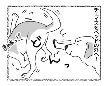 羊の国のラブラドール絵日記シニア!!「朝の押し出し」4
