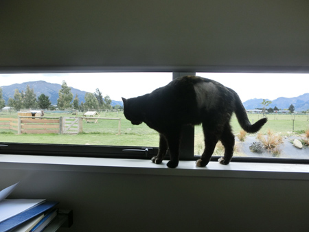 羊の国の猫日記ログ5_6