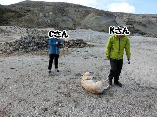 羊の国のラブラドール絵日記シニア!!「一緒にいてね!」写真5
