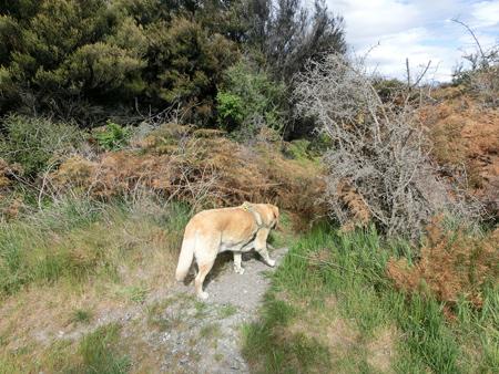 羊の国のラブラドール絵日記シニア!!「あれから半年」写真2