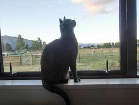 羊の国の猫日記ログ9_写真2