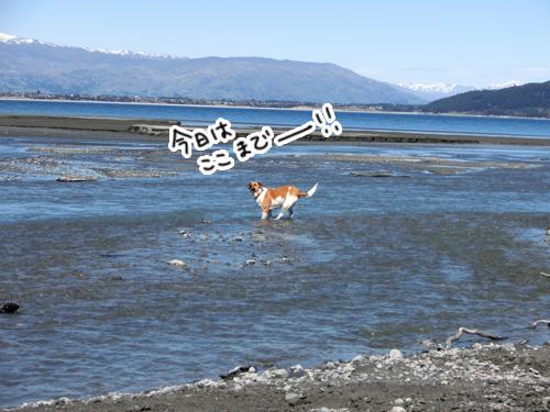 羊の国のラブラドール絵日記シニア!!「夏の準備」写真7