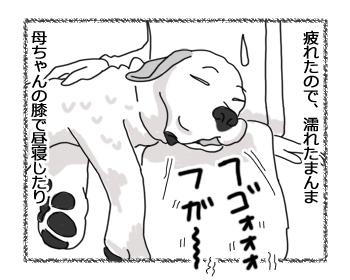 羊の国のラブラドール絵日記シニア!!「バースデー・プレゼント」3