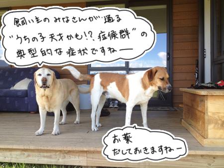 羊の国のラブラドール絵日記シニア!!「ドッグトレーニング開始」写真4