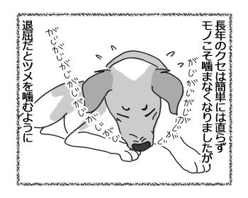 羊の国のラブラドール絵日記シニア!!「チェイスのクセ」2