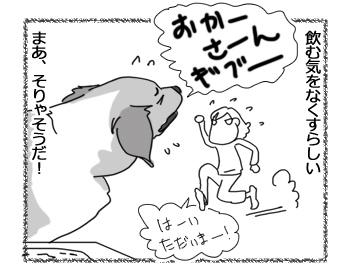 羊の国のラブラドール絵日記シニア!!「かんで飲む」4