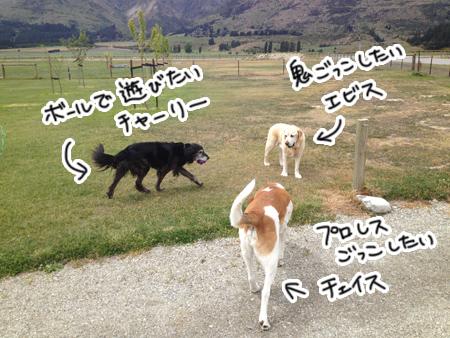 羊の国のラブラドール絵日記シニア!!「男子サンニン」3
