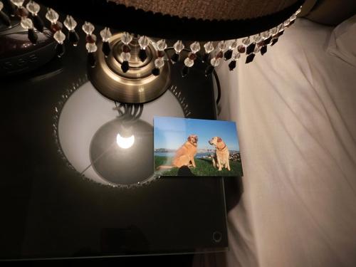羊の国のラブラドール絵日記シニア!!「羊の国の旅行記Part2」3