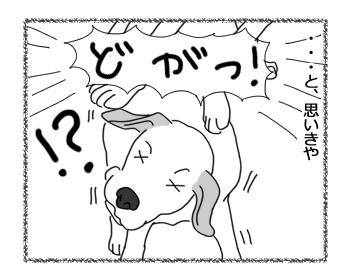 羊の国のラブラドール絵日記シニア!!「兄ちゃんはつらいよ」3