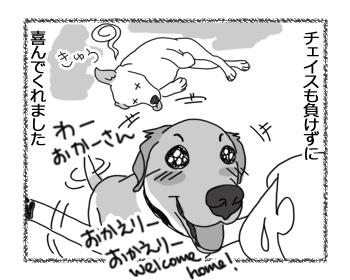 羊の国のラブラドール絵日記シニア!!「兄ちゃんはつらいよ」4