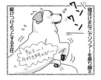 羊の国のラブラドール絵日記シニア!!「主任さんへ」4