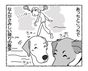 羊の国のラブラドール絵日記シニア!!「チェイスの挑戦」6