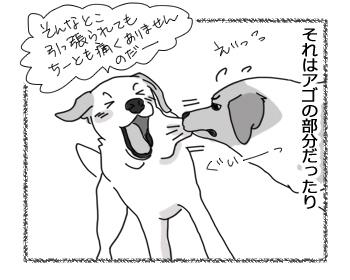 羊の国のラブラドール絵日記シニア!!「おでこはやめなよ」2