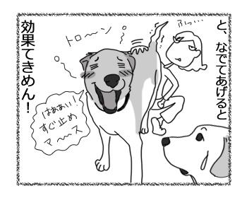 羊の国のラブラドール絵日記シニア!!「チェイスの弱点?」4