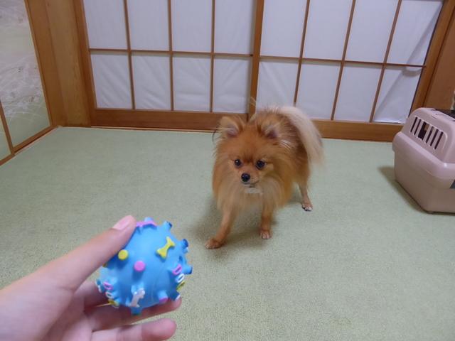 150806ポン太おもちゃ②
