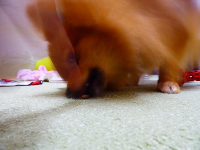 150903愛犬ふれあい②