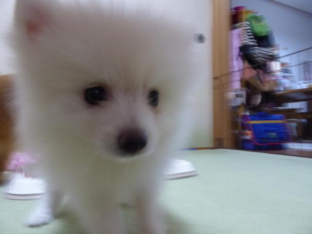 150903愛犬ふれあい⑥