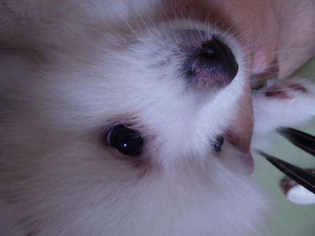 150903愛犬ふれあい⑧