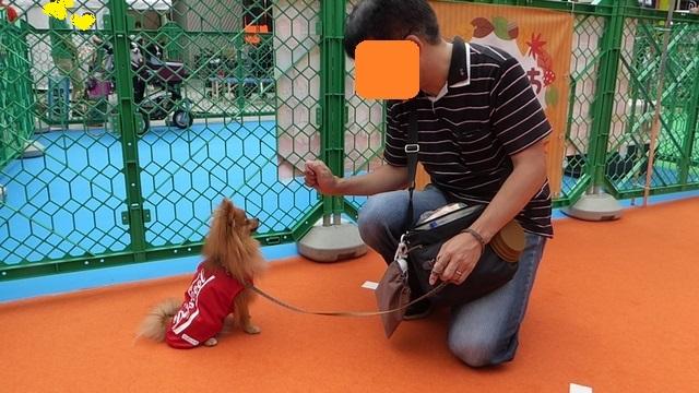 150926犬のきもちフェスタ③