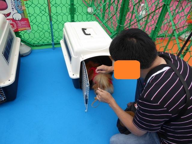 150926犬のきもちフェスタ⑤