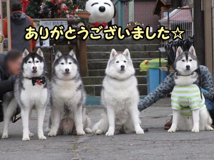 幹事犬2015