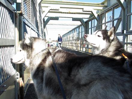 午前中の跨線橋