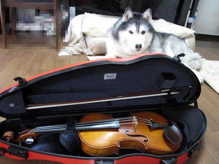 おニューのヴァイオリンケース