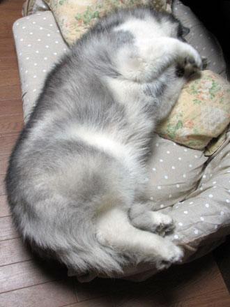 ポっちゃんの寝相
