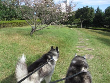 水戸の朝散歩