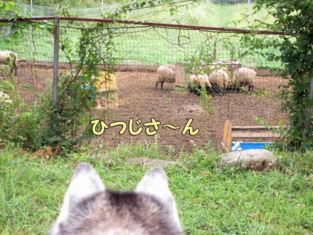 ふじさん牧場