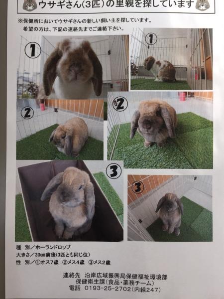 縮小ウサギ