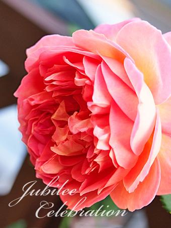 rose2015_192.jpg