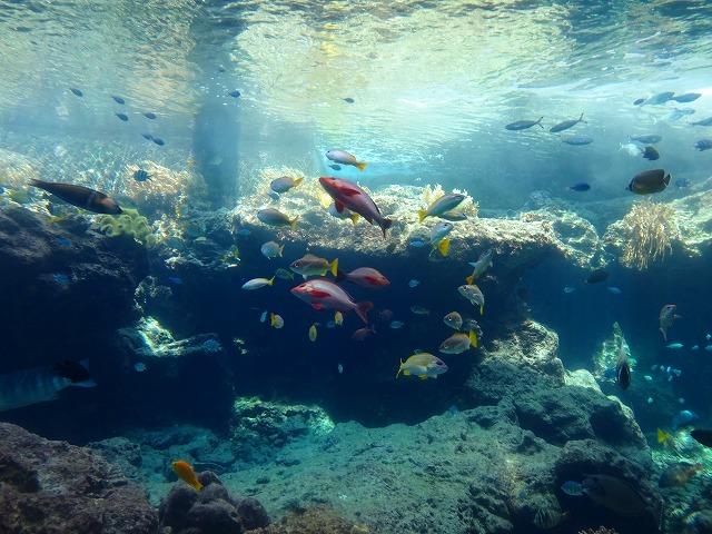 美ら海水族館 (7)