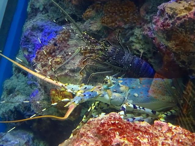 美ら海水族館 (11)