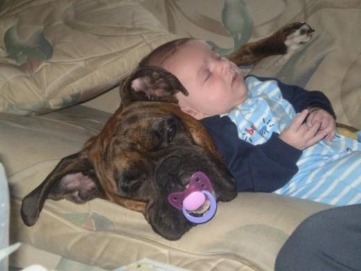 赤ちゃんと仲良しのワンちゃん1