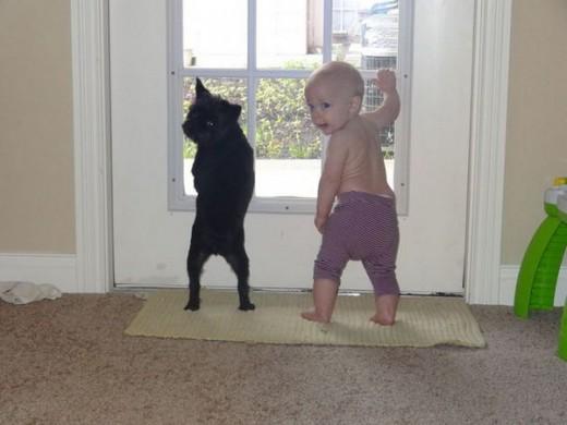 赤ちゃんと仲良しのワンちゃん8