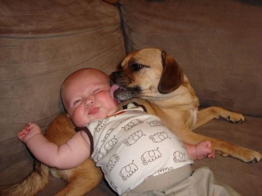 赤ちゃんと仲良しのワンちゃん9