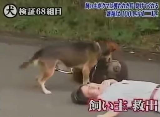 犬のしつけ1