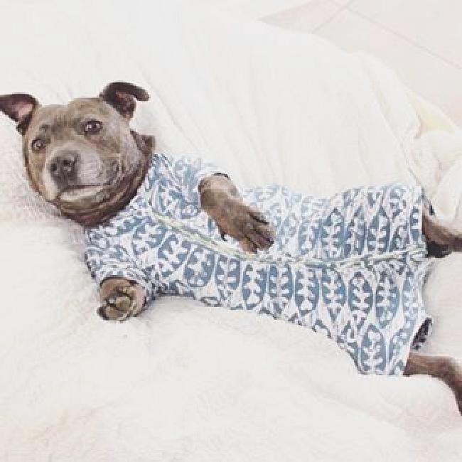 パジャマ犬53