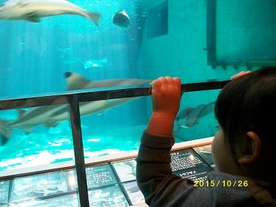 yui水族館