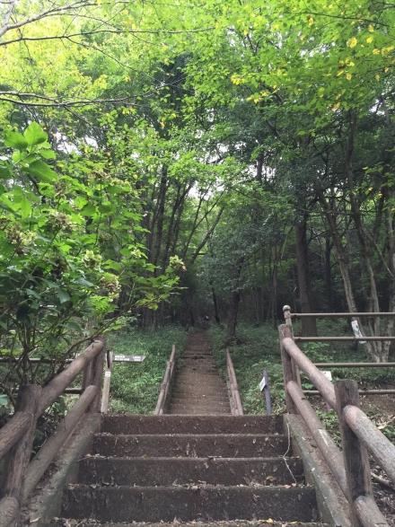 mikamoyama (4)
