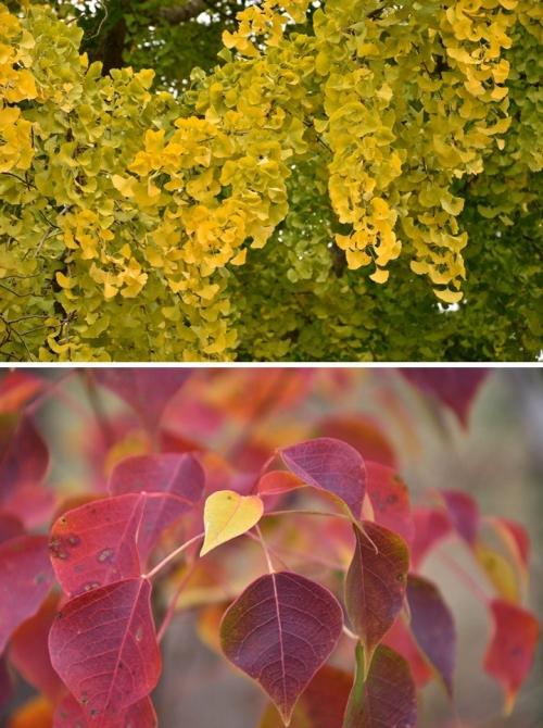 奈良紅葉・黄葉