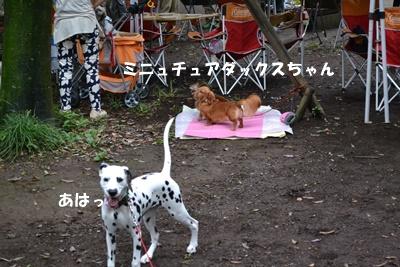 DSC_0505_20151013210154bc3.jpg