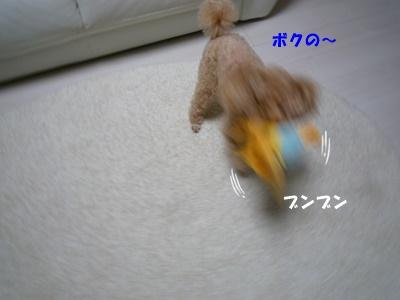 P1020051.jpg
