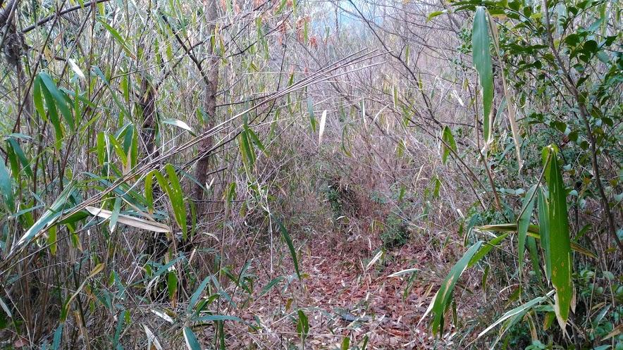 鴻応山/笹藪