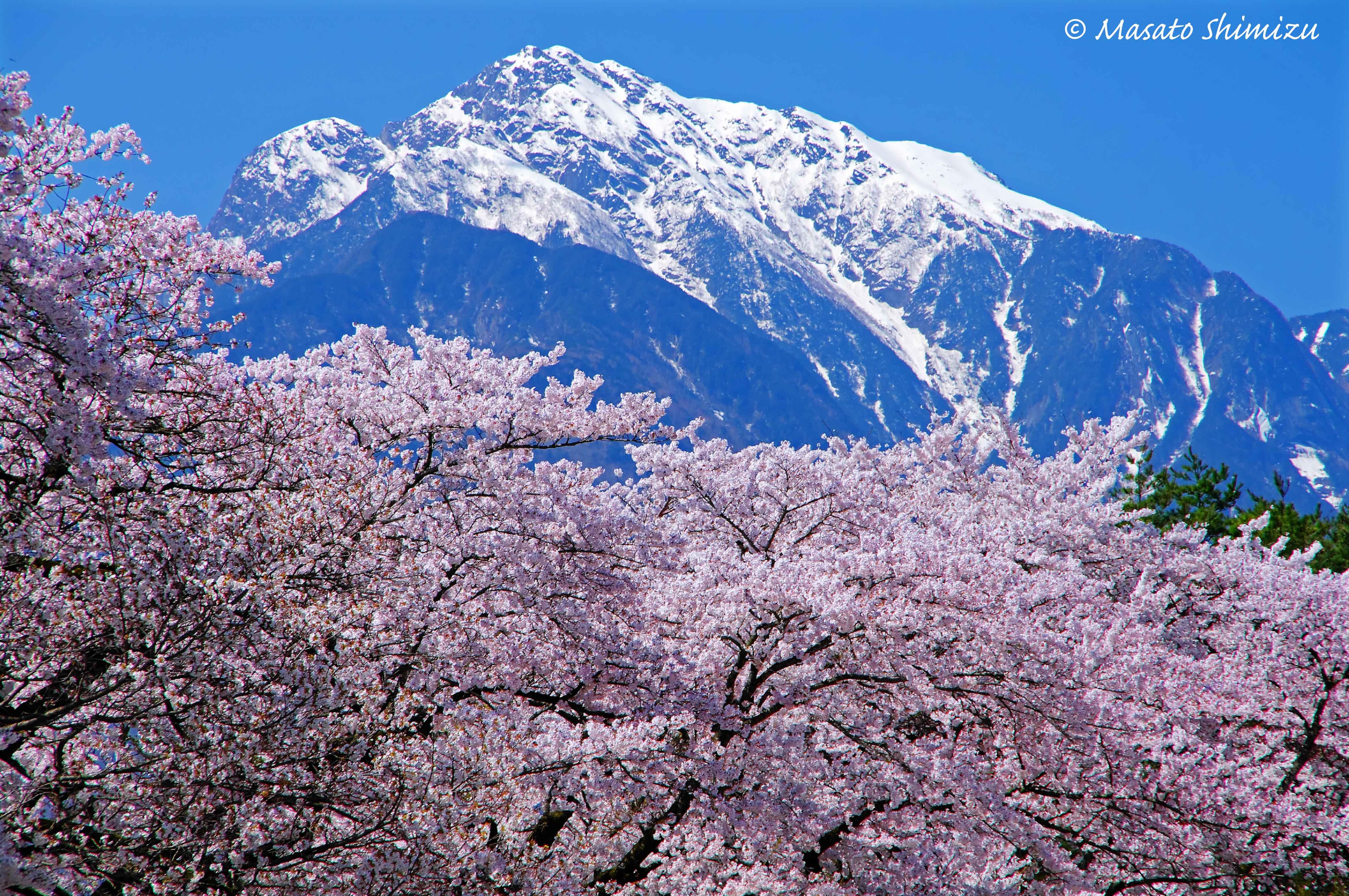 春色の山脈