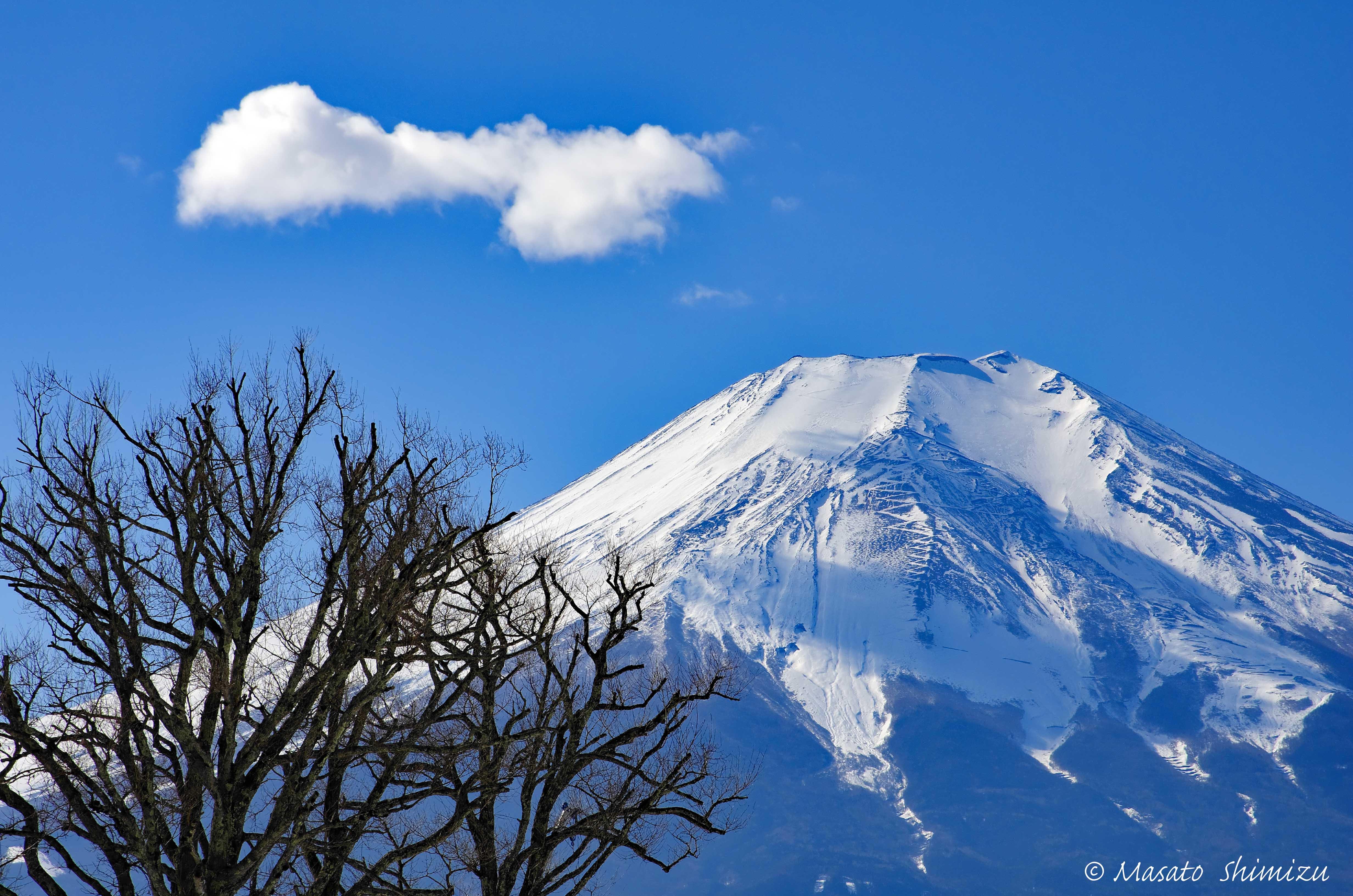 樹・雲・富士