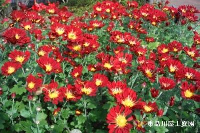 mamu1_201511011242396ff.jpg
